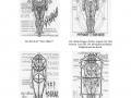 wolfgangvonschemm-miguelserrano-ahderletzteavatar_page_09_zps0b7ad704